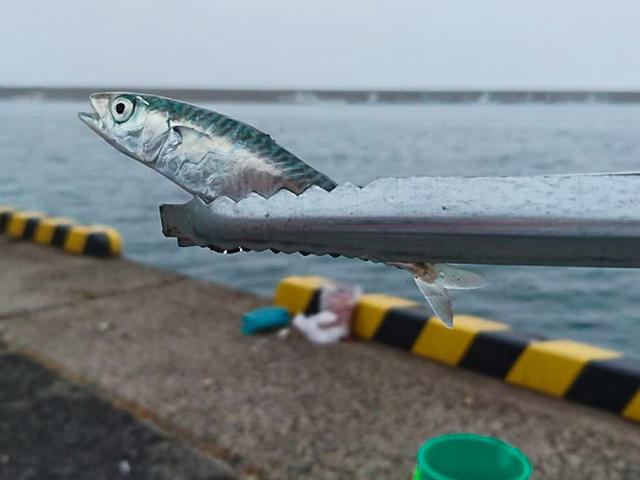 釣具 の トミー